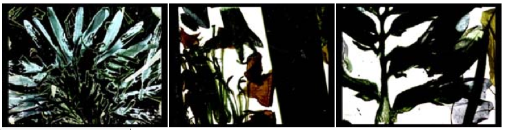 p adams sitney visionary film pdf