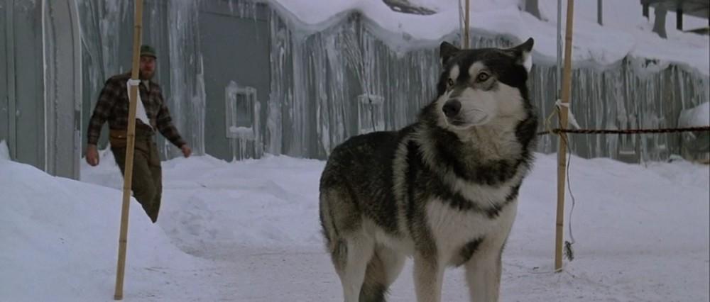Stalker Tarkovsky Dog | www.pixshark.com - Images ...